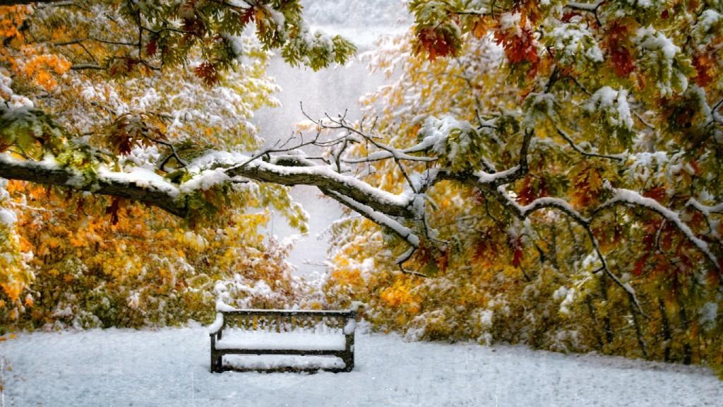 autumn-leaves-meet-winter-snow