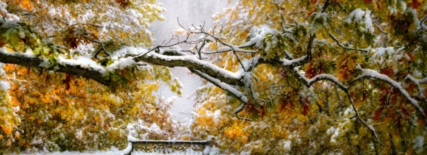Autumn's snow with chilling breeze….